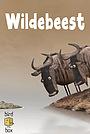 Мультфильм «Wildebeest» (2012)