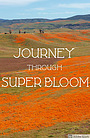 Фільм «Journey Through Super Bloom» (2020)