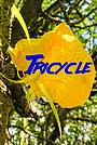 Фільм «Tricycle» (2021)