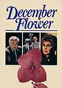 Фильм «Декабрьский цветок» (1984)