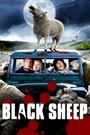 Зіпсована вівця