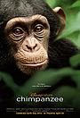 Фільм «Шимпанзе» (2012)