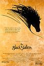 Фильм «Черный скакун» (1979)