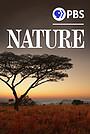 Сериал «Природа» (1982 – ...)